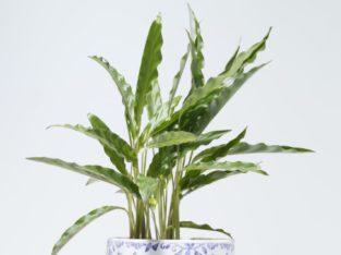 Indoor Plants in Malappuram