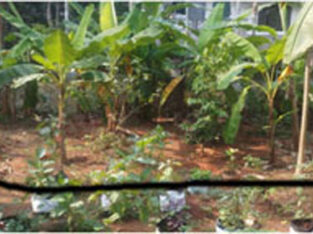Urgent Sale of Residential Plot in Malaparamba