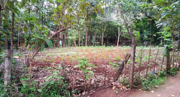 65 cents of land for sale in Velur Centre Thrissur